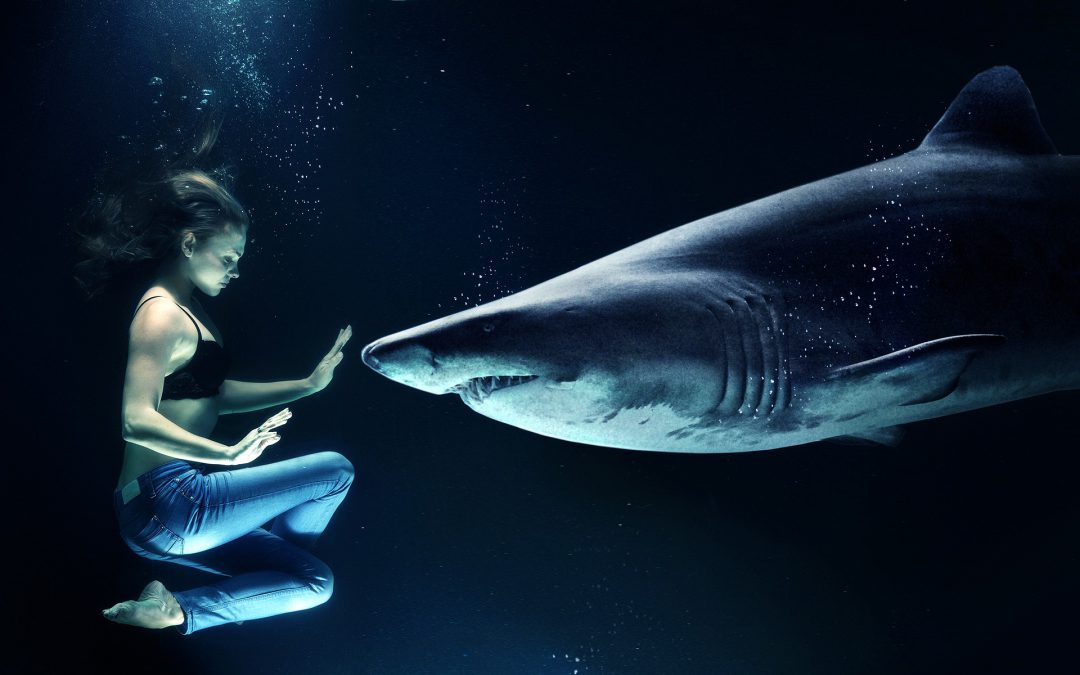 How to be THE Shark in a room full of Sharks!